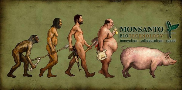 monsanto seine evolution